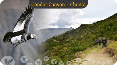 chonta canyon