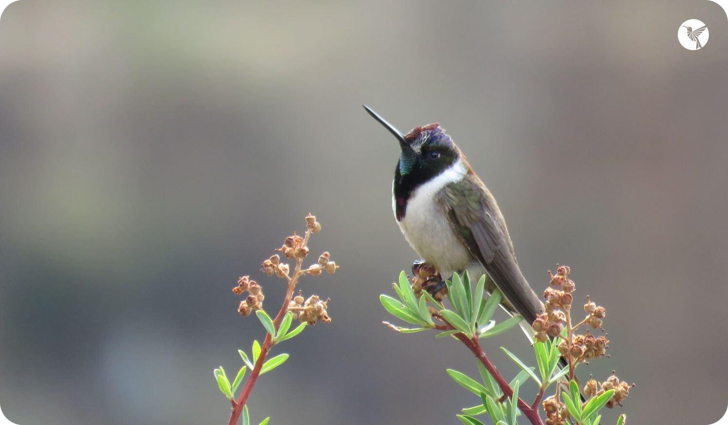 birding-huacarpay.jpg